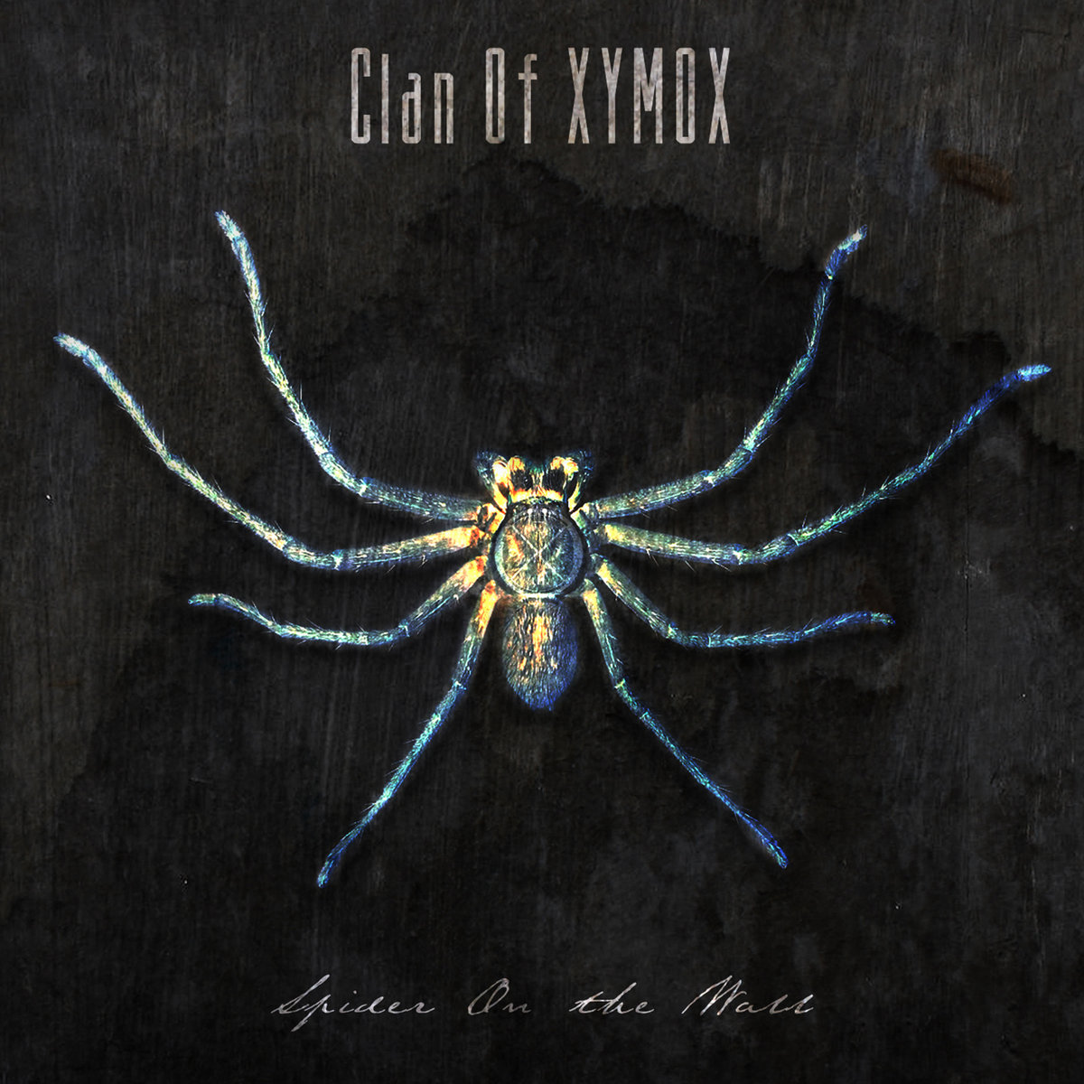 Spider On The Wall Clan Of Xymox Artwork