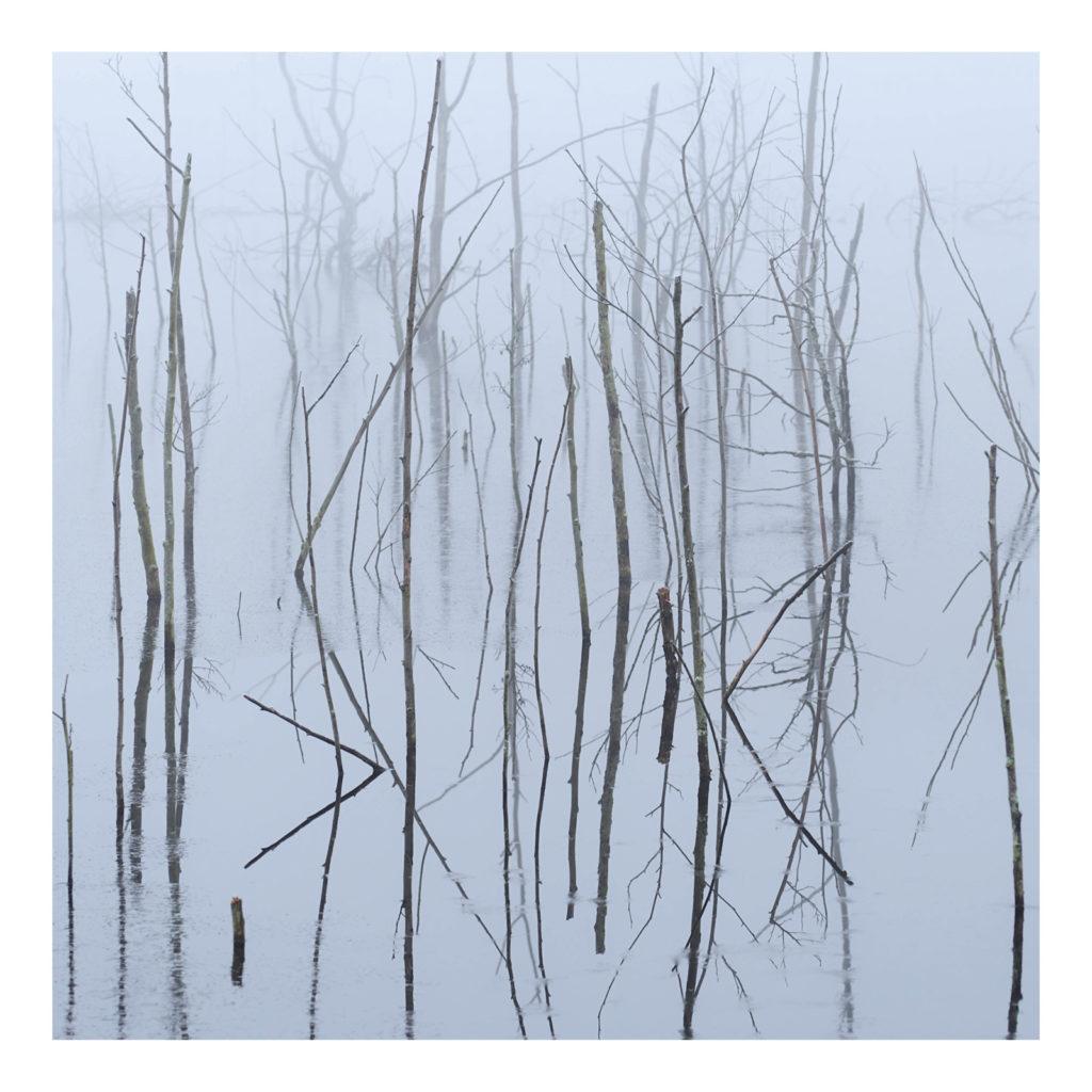 Olhava-Frozen-Bloom-Album-Cover-Artwork